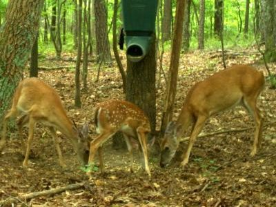 If You Are Trying To Improve The Quality Of Deer Hunting On Your Property,  You May Be Considering A Deer Feeder. Nutrition Is One Of Three Key Factors  That ...